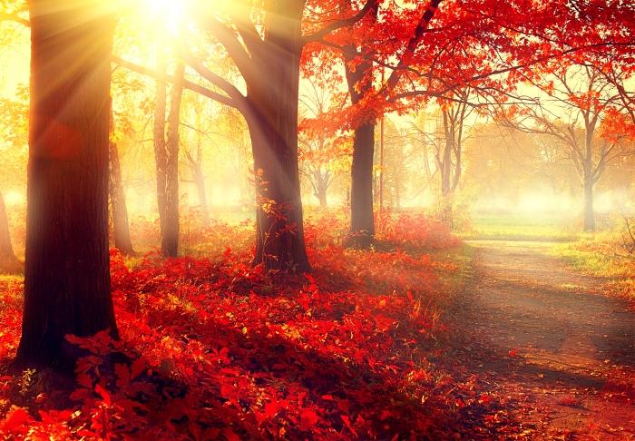 bigstock-autumn-fall-scene-beautiful-710452241.jpg