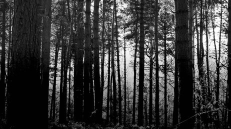 Haunted-woods-taken-at-Hoar-Cross-National-Forest-Leicestershire