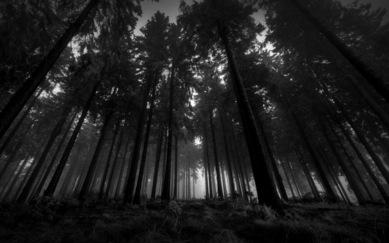 black-and-white-forest-wallpaper_original_crop.jpg